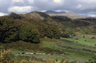A line of Herdwick sheep on the craggy fellside above Boot in Eskdale ...